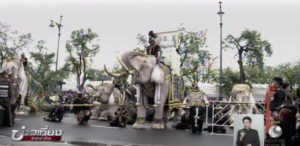 elephants-pay-tribute-to-his-majesty-the-late-king-of-thaialnd