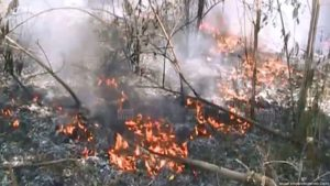 forest fire in Lampang (1)