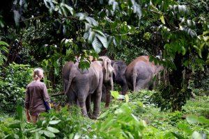 Elephants at Phuket sanctuary