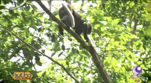 Kaeng Krachan monkey