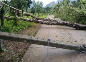 Tak rainstorm trees fall (1)